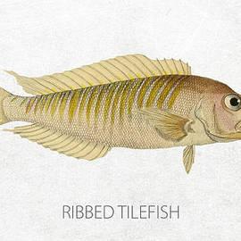 Ribbed tilefish