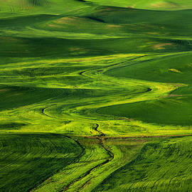 Ribbons of Green