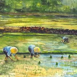 Carol Wisniewski - The Rice Paddy Field