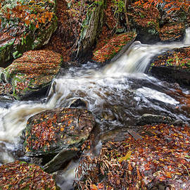 Marcia Colelli - Ricketts Glen in Autumn Beauty