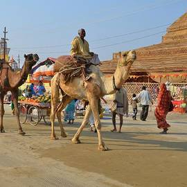 Kim Bemis - Riding a Camel at the Kumbhla Mela - Allahabad India