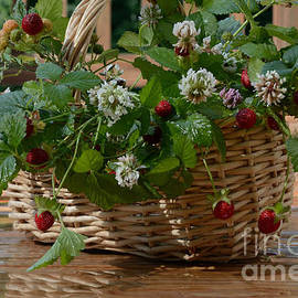 Luv Photography - Wild Strawberries and White Clover