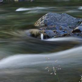 Phil Rispin - Trout Stream 005