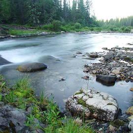 Phil Rispin - Trout Stream 004