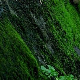 Klay Ahles - Riverside Moss