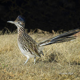 Karen Slagle - Road Runner