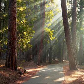 Jane Rix - Road through Mariposa Grove