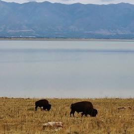 Bruce Bley - Roaming Buffalo