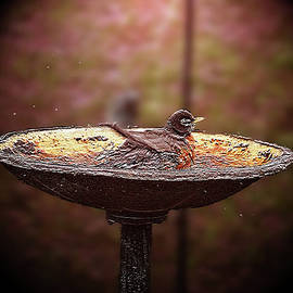 EricaMaxine  Price - Robin Takes Morning Bath