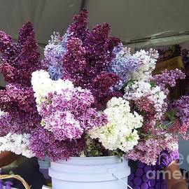 Charlotte Gray - Rochester Lilac Festival