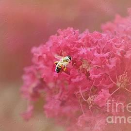 Peggy  Franz - Rockin Pink Bee