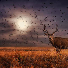 Priscilla Burgers - Rocky Mountain Arsenal Deer and Birds