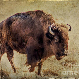 Janice Rae Pariza - Rocky Mountain Bison
