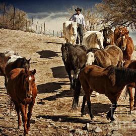 Priscilla Burgers - Rodeo Roundup