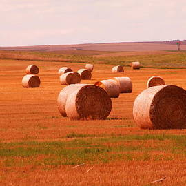 Jeff  Swan - Rolls of hay