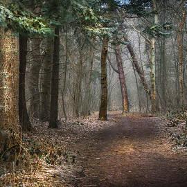 Hugo Bussen - Romantic forest path