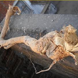 Basant Soni - Root Sculpture