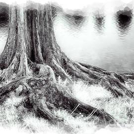 Dan Carmichael - Roots Run Deep - Greensboro NC II