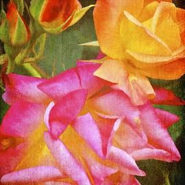 Pamela Cooper - Rose 266
