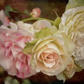 Pamela Cooper - Rose 308