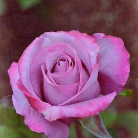 Pamela Cooper - Rose 315