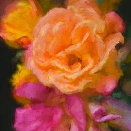 Pamela Cooper - Rose 320