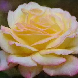 Pamela Cooper - Rose 326