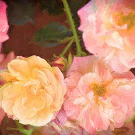 Pamela Cooper - Rose 328