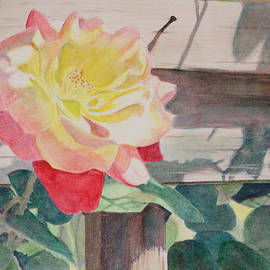 Christopher Reid - Rose Aglow