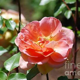 DejaVu Designs - Rose Blossom