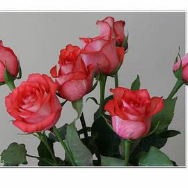Mariarosa Rockefeller - Rose Bouquet