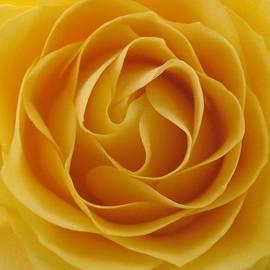 Carol Welsh - Rose Center 3