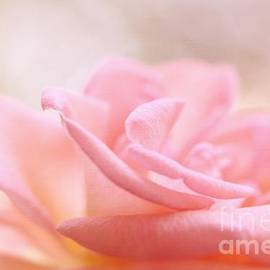LHJB Photography - Rose Delight