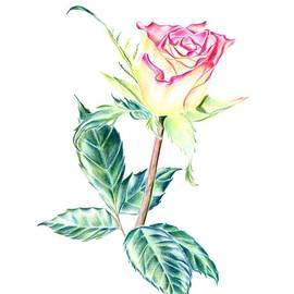 Elizabeth Lock - Rose
