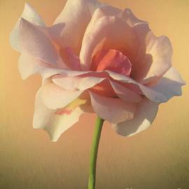 RC deWinter - Rose Ethereal