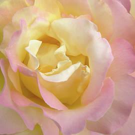 Jennie Marie Schell - Rose Flower Parfait