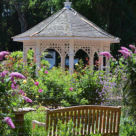Jim Fitzpatrick - Rose Garden and Gazebo at Central Park in San Mateo CA