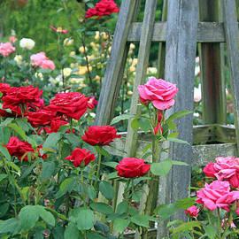 Cynthia Guinn - Rose Garden