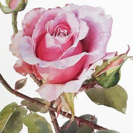 Greta Corens - Pink Rose Grace