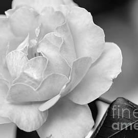 Kaye Menner - Rose in Black and White by Kaye Menner