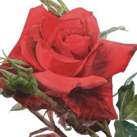 Greta Corens - Red Rose Jake