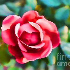 Luther   Fine Art - Rose Making A Good Impression