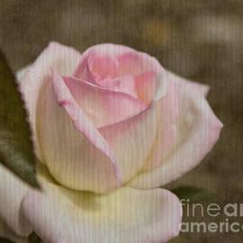 Arlene Carmel - Rose On Rose
