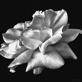 Jennie Marie Schell - Rose Petals in Black and White