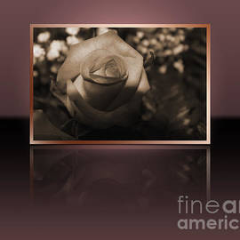 Claudia Mottram - Rose reflection
