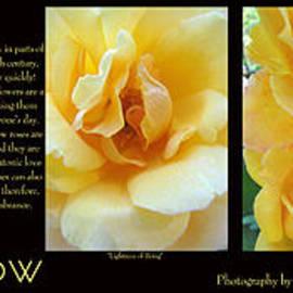 Brooks Garten Hauschild - Rose Yellow