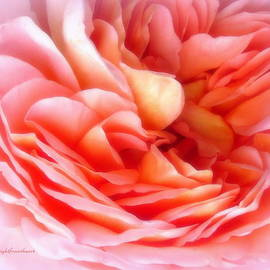 Bob and Kathy Frank - Roses
