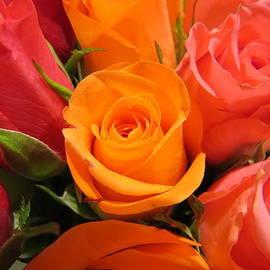 H B Vesseur - Roses