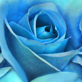 Jennie Marie Schell - Roses Three Blue Abstract