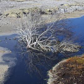 Venetia Featherstone-Witty - Rotorua Caldera New Zealand